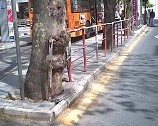 el árbol hambriento